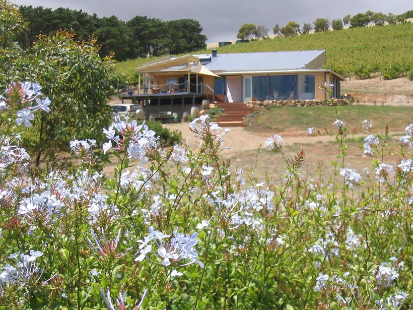 The Blue Grape Vineyard Accommodation - Accommodation Yamba
