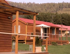 Maydena Country Cabins Accommodation  Alpaca Stud - Accommodation Yamba