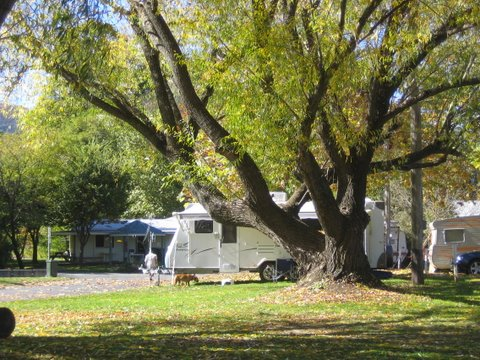 Tumbarumba Creek Caravan Park - Accommodation Yamba