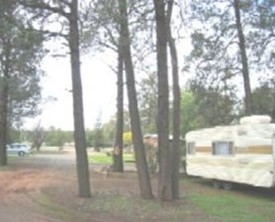 The Kelpie Caravan Park - Accommodation Yamba