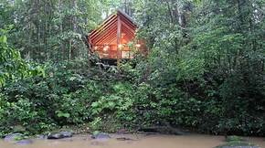 The Canopy Treehouses - Accommodation Yamba
