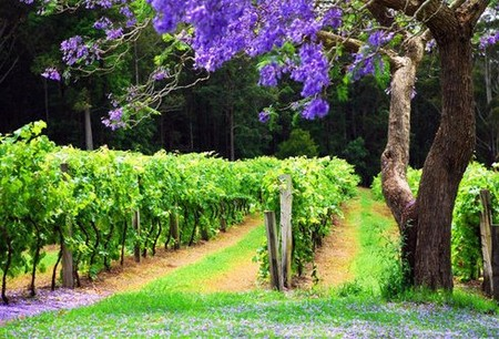Bago Vineyards - Accommodation Yamba