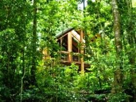 Fur'N'Feathers Rainforest Tree Houses - Accommodation Yamba