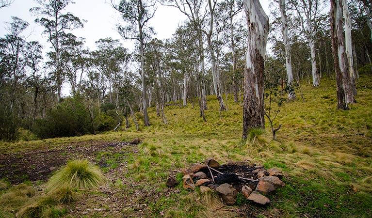 Gummi Falls campground - Accommodation Yamba