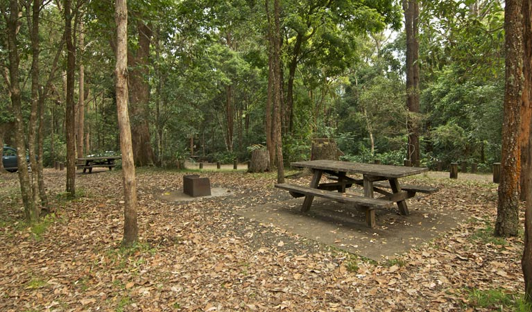 Sheepstation Creek campground - Accommodation Yamba