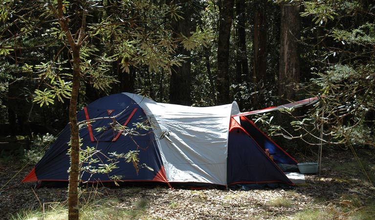 Thungutti campground - Accommodation Yamba
