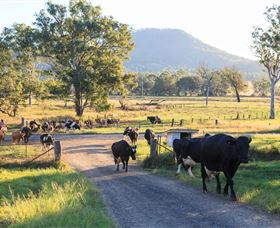 Tommerups Dairy Farmstay - Accommodation Yamba