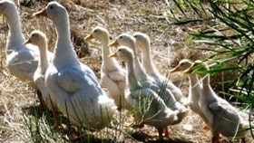 Duck Duck Goose Bed and Breakfast - Accommodation Yamba