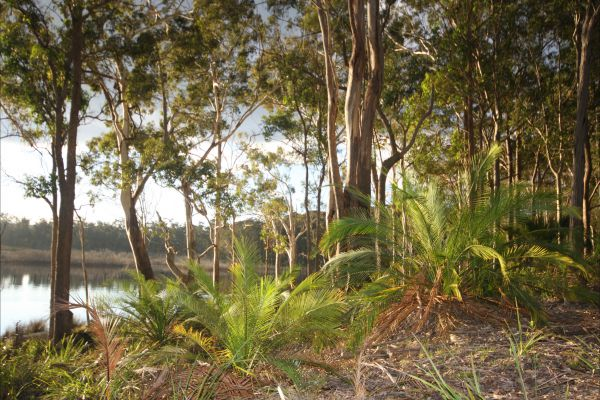 Tanja Lagoon Camp - Accommodation Yamba