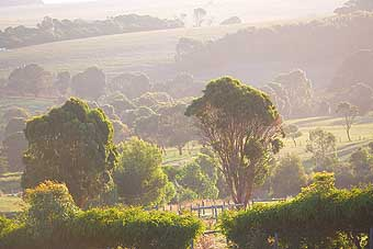 Mackas Farm - Accommodation Yamba