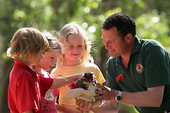 Cleland Wildlife Park - Accommodation Yamba