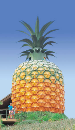 The Big Pineapple - Accommodation Yamba