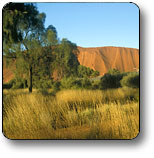 Uluru - Kata Tjuta National Park - Accommodation Yamba