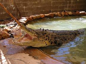 Wyndham Zoological Gardens and Crocodile Park - Accommodation Yamba