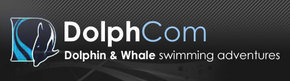Dolphcom - Dolphin  Whale Swimming Adventures - Accommodation Yamba