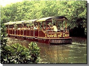 Daintree Rainforest River Trains - Accommodation Yamba
