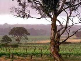 Yangarra Estate Vineyard - Accommodation Yamba