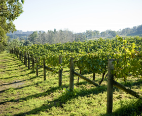 Surveyor's Hill Vineyards - Accommodation Yamba