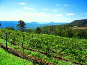 Preston Peak Wines - Accommodation Yamba