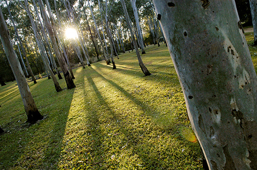 Tondoon Botanic Gardens - Accommodation Yamba