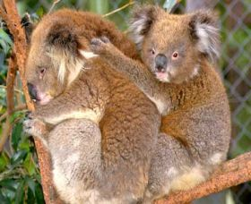 Shoalhaven Zoo - Accommodation Yamba