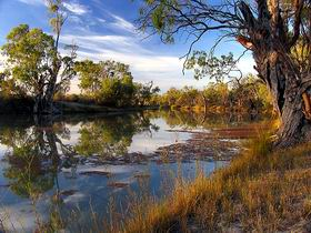 Murray River National Park - Accommodation Yamba
