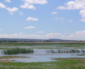 Fivebough Wetlands - Accommodation Yamba