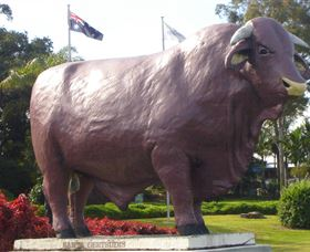 Rockhampton Bull Statues - Accommodation Yamba