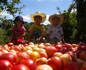 Bonny Glen Fruits - Accommodation Yamba