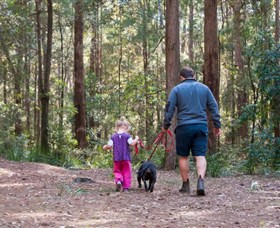 Olney State Forest - Watagan Mountains - Accommodation Yamba