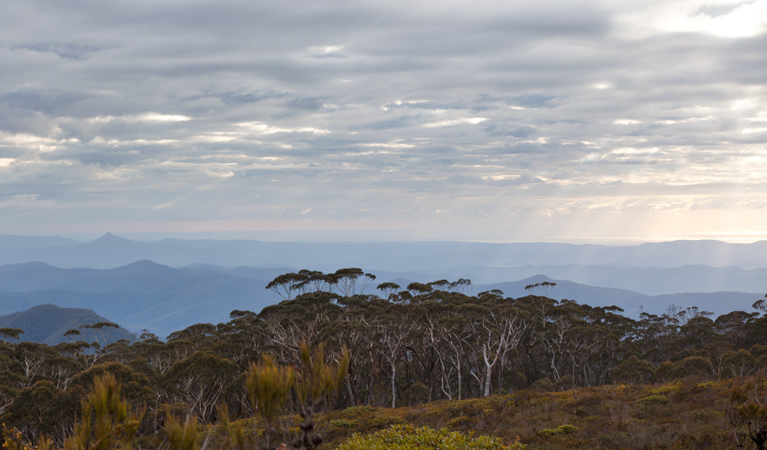 Mount Budawang trail - Accommodation Yamba