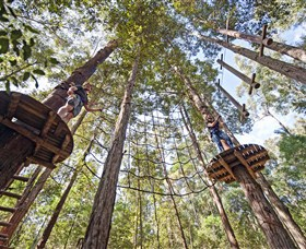 TreeTop Adventure Park Central Coast - Accommodation Yamba