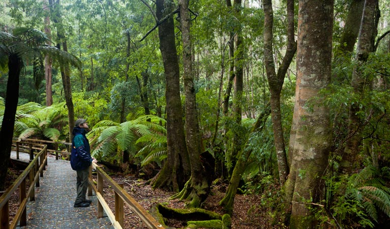 Monga National Park - Accommodation Yamba