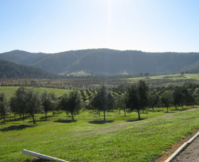 Hastings Valley Olives - Accommodation Yamba