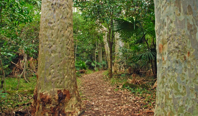 Depot Beach Rainforest walk - Accommodation Yamba