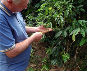 Wombah Coffee Plantation - Accommodation Yamba