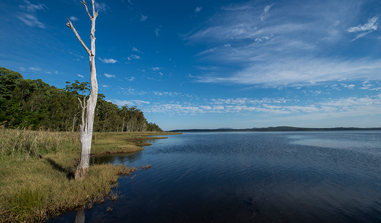 Lake Innes Nature Reserve - Accommodation Yamba