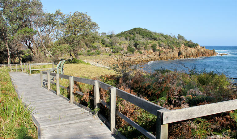 Mimosa Rocks walking track - Accommodation Yamba