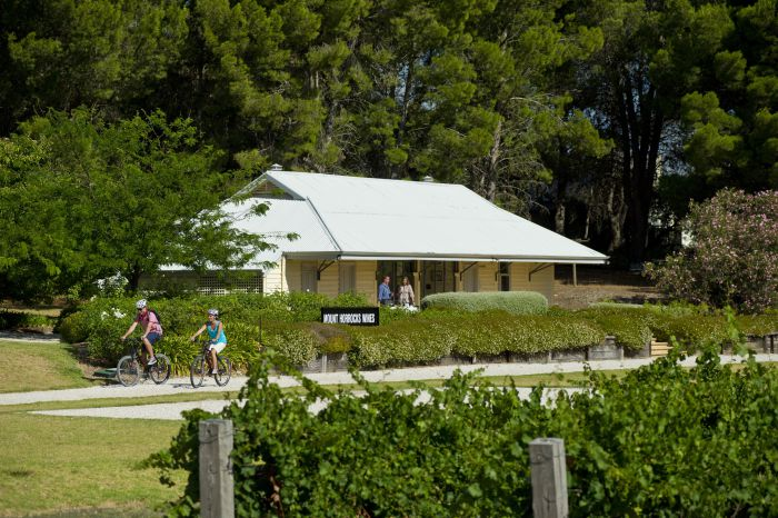 Tour de Vines - Accommodation Yamba