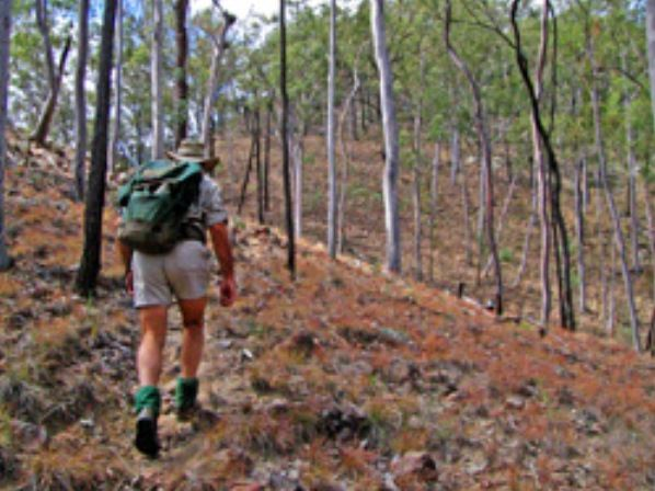 Shepherd's Peak Trail - Accommodation Yamba