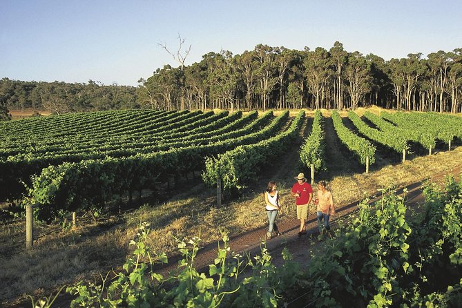 Margaret River Caves Wine and Cape Leeuwin Lighthouse Tour from Perth - Accommodation Yamba