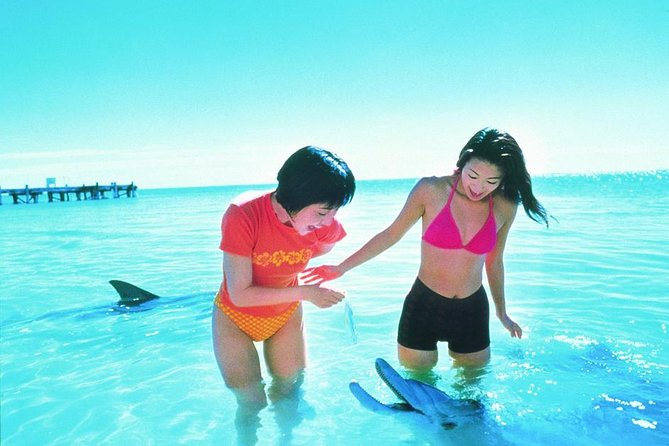 Monkey Mia Dolphins  Shark Bay Air Tour From Perth - Accommodation Yamba