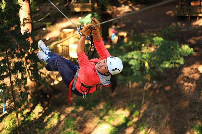 Trees Adventure Lane Poole Park - Treetop  Zipline Experience - Accommodation Yamba