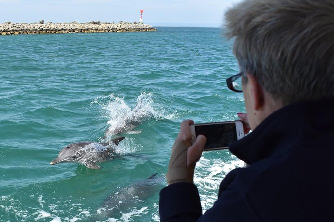 Mandurah Dolphin Island Adventure - Accommodation Yamba
