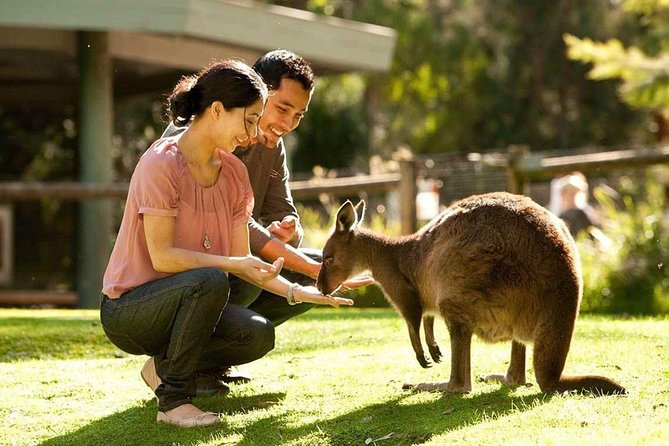 Very Best of Perth Tour - Wildlife Park  City Highlights Tour - Accommodation Yamba