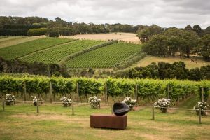 Montalto Vineyard Mornington Peninsula Discovery Wine Tasting and Lunch - Accommodation Yamba