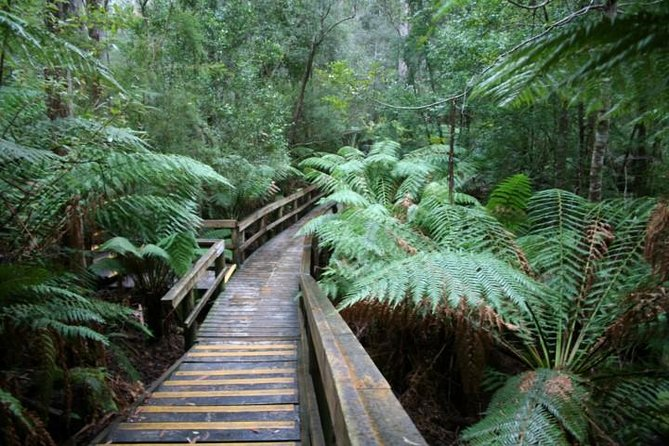 Small-group Hastings Caves and Tahune Forest AirWalk Tour from Hobart - Accommodation Yamba