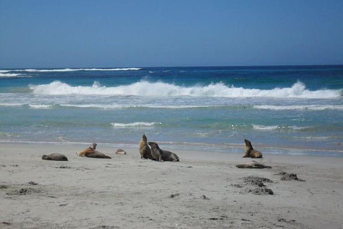 Kangaroo Island in a Day Tour from Adelaide - Accommodation Yamba