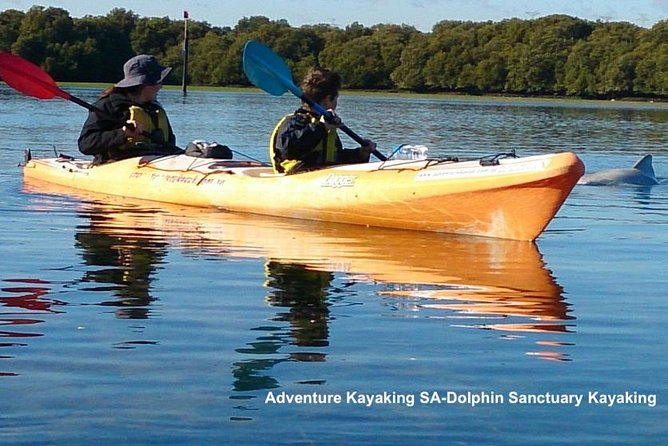 Dolphin Sanctuary and Ships Graveyard Kayak Tour - Accommodation Yamba