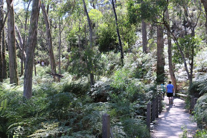 Self-Guided Waterfall Gully to Mount Lofty Hike from Adelaide - Accommodation Yamba